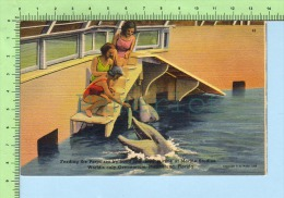 MARINELAND F.L. ( FEEDING THE PORPOISES )  POST CARD CARTE POSTALE 2 SCANS - Stati Uniti