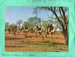 AUSTRALIAN ABORIGINES ON WALKABOUT - Aborigènes