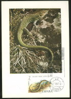Espagne Lézard Lacerta Viridis Carte Maximum 1974 Spain Lizard Maxicard - Reptiles & Batraciens