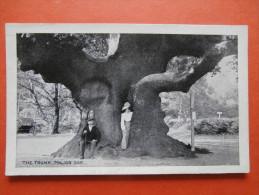 27191 PC: NOTTINGHAMSHIRE: The Trunk, Major Oak. - England