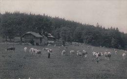 Val De Ruz, Pâturage La Dame, Ferme Oppliger (68) - NE Neuchâtel