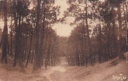 Carte , 85 , SION-sur-l'OCÉAN , La Forêt Domaniale De Sion à St-Jean-de-Monts - Saint Jean De Monts