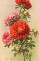 Signée C. KLEIN : Reines-marguerites Rouges - Klein, Catharina