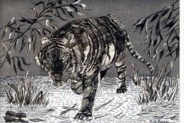 TIGER - DUFEX  CARD M126 - Tigers