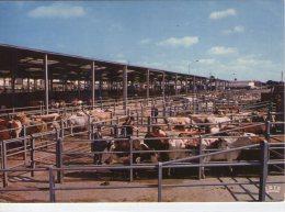 Chemillé..animée..le Foirail..vaches..bovins..boeufs..bétail - Chemille