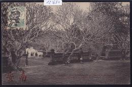 Annam - Hué - éléphants Et Chevaux En Marbre Devant Le Tombeau De Tu-Bue - 1906, Timbre Indochine Française (12´630) - Viêt-Nam