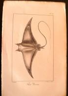 GRAVURE 19° SIECLE :  Raie  Giorna (pl 16) - Prints & Engravings