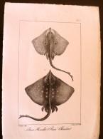 GRAVURE 19° SIECLE : Raie Miralet , Raie Chardon(pl 3) - Prints & Engravings