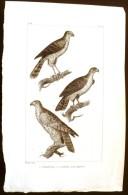 GRAVURE 19° SIECLE:  Oiseaux: L'EPERVIER, L'AUTOUR, LE GERFAUT (Pl 118). - Prints & Engravings