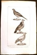 GRAVURE 19° SIECLE:  Oiseaux: LA GELINOTTE DU CANADA, LE GANGA, LE LAGOPEDE(Pl 228) . - Prints & Engravings