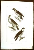 GRAVURE 19° SIECLE:  Oiseaux: LE FAUCON, LE SACRE, LE TANAS (Pl 119). - Prints & Engravings