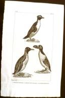 GRAVURE 19° SIECLE:  Oiseaux: LE GRAND PINGOIN, LE MANCHOT SAUTEUR, LE GRAND MANCHOT (Pl 236). - Stiche & Gravuren
