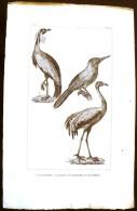 GRAVURE 19° SIECLE:  Oiseaux: LE JACAMAR, LA GRUE, LA DEMOISELLE DE NUMIDIE(Pl 205) . - Prints & Engravings