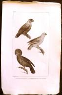 GRAVURE 19° SIECLE:  Oiseaux: LE PAPEGAI DE PARADIS, LE PAPEGAI MAILLE, LE TAVOUA (Pl 9). - Stiche & Gravuren