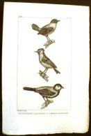 GRAVURE 19° SIECLE:  Oiseaux: LE TROGLODYTE, LE ROITELET, LA MESANGE CHARBOINNIERE (Pl 174) . - Prints & Engravings