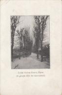 CPA E VELLOIS- TREES IN WINTER - Herrlich, Lotte
