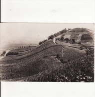 """BECH-KLEINMACHER/REMICH (Luxembourg) Les Vignobles Du """"Hebierg""""-VIN-Affranchissement-Timbre-DOCU Photo-2 SCANS - - Cartes Postales"""