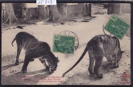 Tonkin : Tigres Du Massif Montagneux De La Rivière Noire En Chasse Dans Une Habitation Muong Indochine Française(12´713) - Viêt-Nam