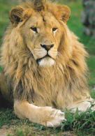 CPM LION PARC ANIMALIER ATTRACTIONS DOMPIERRE SUR BESBRE - Leoni