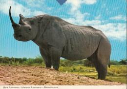 ZAMBIA - Black Rhinoceros 1973 - Zambia