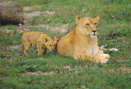 CPM  LIONNE ET SON PETIT LIONCEAU  PARC ANIMALIER ATTRACTIONS DOMPIERRE SUR BESBRE - Leoni