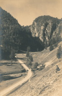 ROUMANIE - Les Gorges De La DAMBOWITZA - Romania