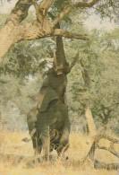 ZIMBABWE - Elephant 1988 - Simbabwe
