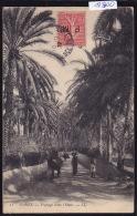 Tunisie - Gabès : Route Dans L'oasis, Cheval, Promeneurs - Vers 1907 (12´800) - Tunisie