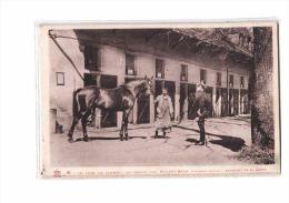 65 TARBES Haras, Etalon, Pur Sang Anglais, Buland Bala, Fils De Blandford Et Saffian, Equitation, Ed Labouche 8, 193? - Tarbes
