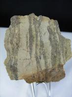 BLENDE EN FILET DANS CALCAIRE DU LIAS 8, X 4,5 X  COMBECAVE - Minéraux