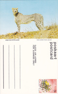 Cheetah, Namibia, South West Africa, 40-60s - Namibia