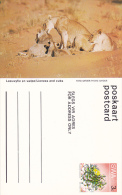 Lioness And Cubs, Namibia, South West Africa, 40-60s - Namibia