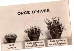 Cpa Sur L'utilisation De Divers Engrais Pour L'orge D'hiver (20.50) - Cultivation