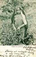 Tamil Tea Pluckers 1904. Young Girl, Jeune Femme, Fille - Sri Lanka (Ceylon)