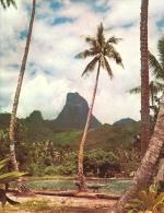 TAHITI, Collection UTA . (Grand Format  19.5x15 Cm ) - French Polynesia