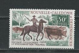 Nouvelle-Calédonie:  PA 104 **  Elevage De Bovin - Vaches