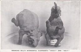 PERFORMING ELEPHANTS -BRONCHO BILLS 'SAUCY' @ 'SALT' - Elephants