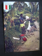 VENTE DE COEURS DE PALMIERS  IRIS 7517 - Côte-d'Ivoire