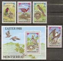 AVES - MONTSERRAT 1988 - Yvert #669/72+H45 - MNH ** - Pélicans