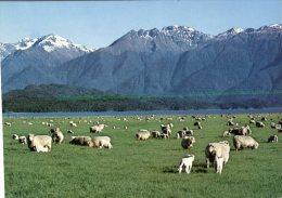 (789) New Zealand - Sheep & Mountains - 1946-....: Moderne