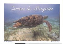 Cpm - Tortue De Mayotte - Schildpadden