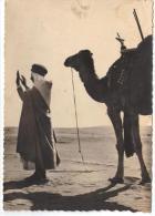 Collection Saharienne La Prière Du Soir - Sahara Occidental