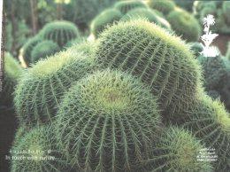 (349) United Arab Emirates - Abu Dhabi Al Ain Wildlife Park - Cactus - Emirati Arabi Uniti