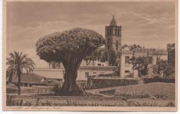 TENERIFE  ET DRAGO DE YCOD        Voir Les Scans - Tenerife