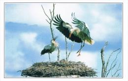 IMAGES - Cigogne Et Cigogneau Dans Leur Nid, La Mère Arrivant - Circulée En 2001 - Oiseaux