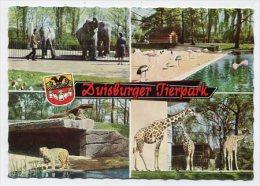 GERMANY - AK 171779 Duisburger Tierpark - Duisburg