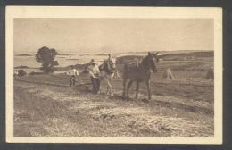 Agriculture - Le Labourage - Chevaux - Publicité - Chocolat Klaus - 26996** - Cultivation