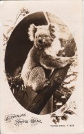 C1930 AUSTRALIAN NATIVE BEAR  - ROSE SERIES - Australie