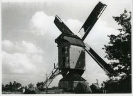 VOSSELAAR (Antw.) - Molen/moulin - Echte Foto 18x24 Cm. Van De Verdwenen Bergeneindmolen In Werking Omstreeks 1950 - Orte