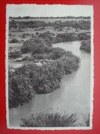 CONGO BELGE 1953 / LA RIVIERE RUTSHURU A GWANGWA / LAC EDOUARD / HIPPOPOTAMES HIPPO's - Congo Belge - Autres